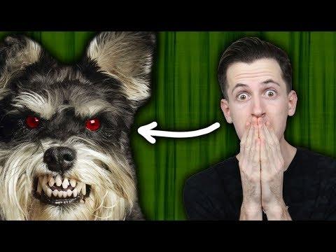 טעמתי כלב בפעם הראשונה