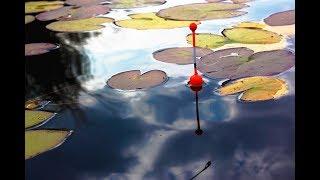 Душевная рыбалка на поплавок холодным осенним утром!