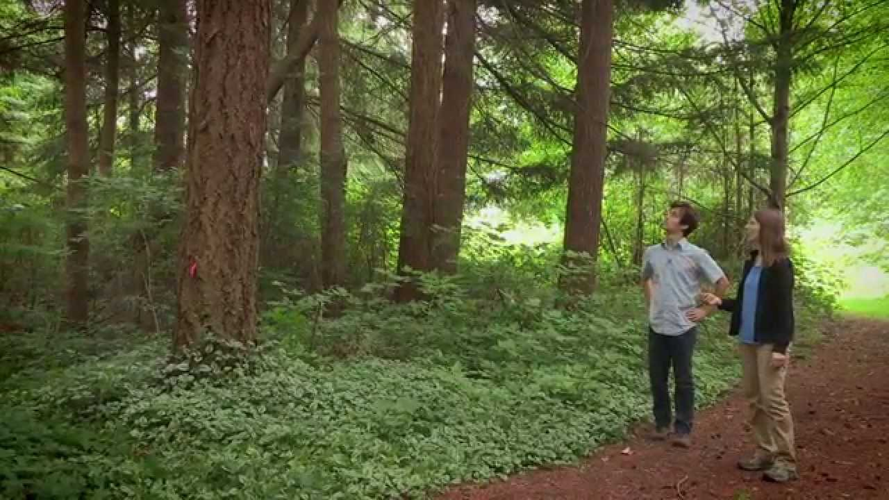 Forest Floor In The Ecosystem Youtube