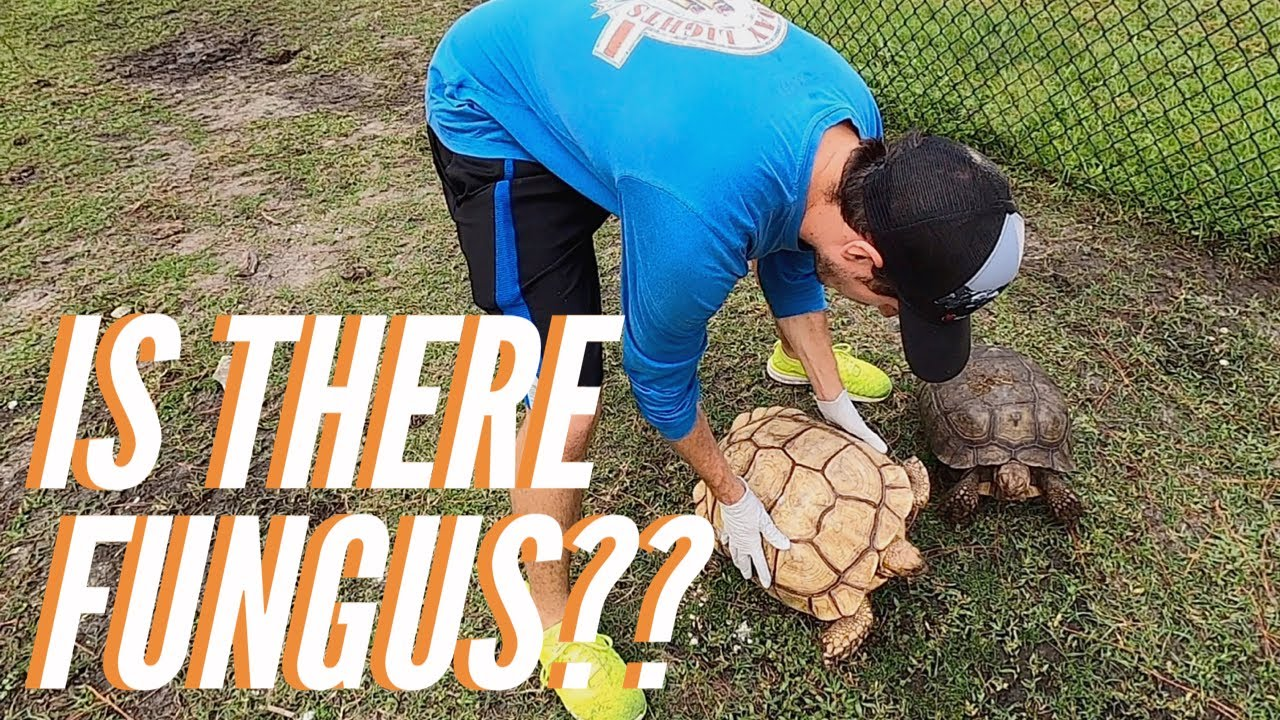 Tortoise Update at Timmy's!