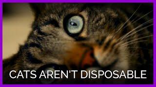 Cats Aren't Disposable
