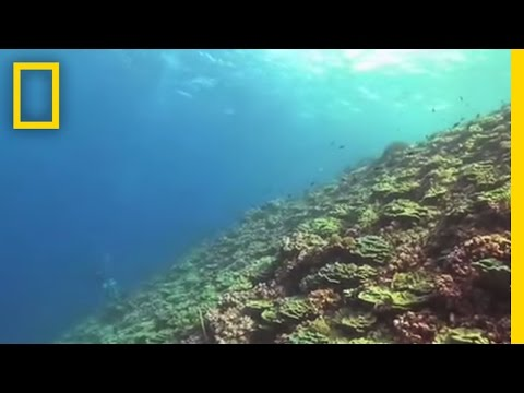 Flint Island's Coral Reefs | National Geographic