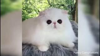 TRY NOT TO LAUGH - FUNNY CATS COMPILATION 1 - 2019 ( KOMİK KEDİ VİDEOLARI 2019 )