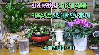 화원,농원처럼 생기있게 화초를 키울수있는 일제 한방생약 대공개~!!!