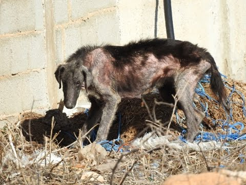 Rescue of mange dog feeding off corpses - First day of a new life