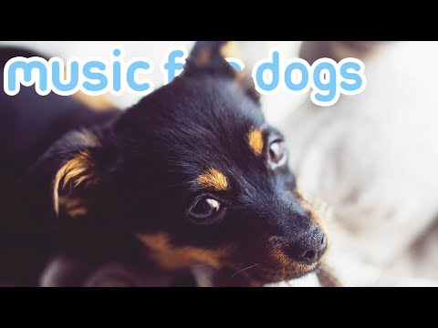 8 HOURS of Relaxing Music for Anxious and Depressed Dogs! Help Your Dog Sleep!