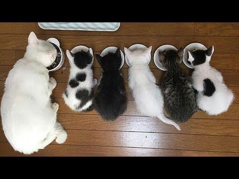 Cutest Cats! Cute is Not Enough - FUNNY CATS! 2018