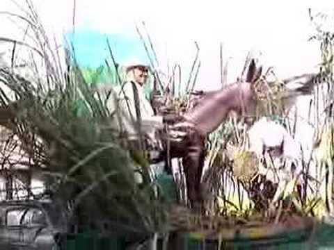 Fiestas Nacionales De La Panela Frontino Diciembre 2006