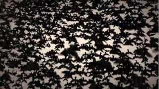 Jo Mango - The Black Sun (Official Video)