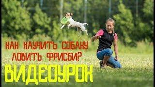 Как научить собаку ловить фризби