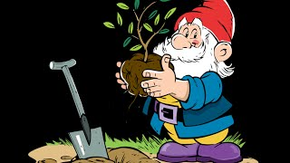 Как правильно посадить гладиолусы (часть 1)