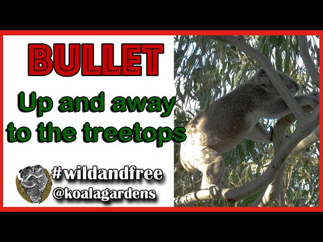 Bullet up and away to the treetops