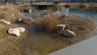 올겨울 첫 한파에 얼어버린 생태호수