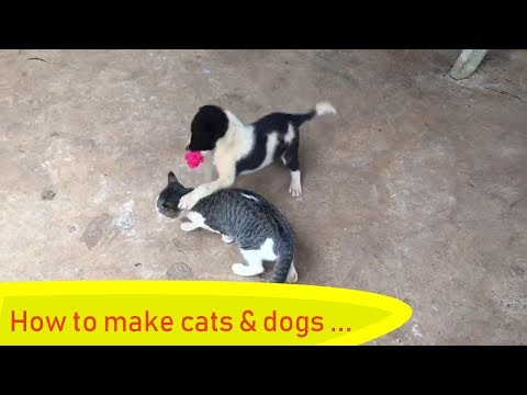 Wow! The humor of cats and dogs and romantic love😻