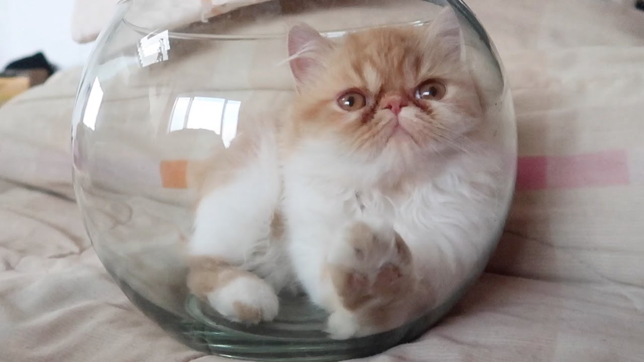 One cat one fish bowl youtube reviewsmspy