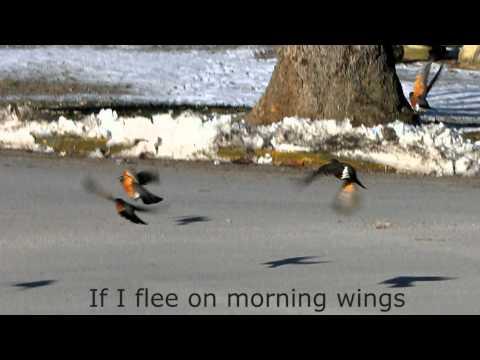 If I Flee on Morning Wings - Fernando Ortega