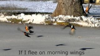 if i flee on morning wings fernando ortega