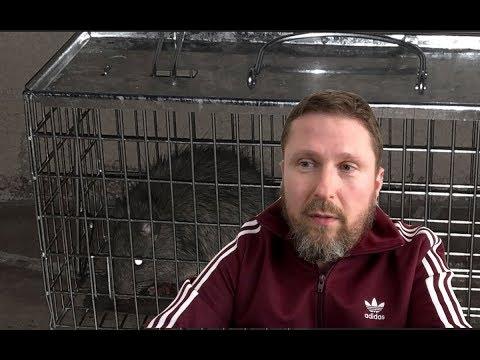 Как мы ловили крысу thumbnail