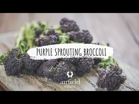 Purple Sprouting Broccoli With Lemon & Parsley Dressing