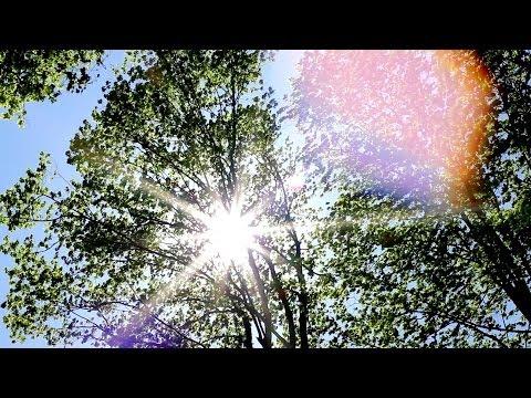 Cambridge Ontario Canada Nature Film - Euphoria