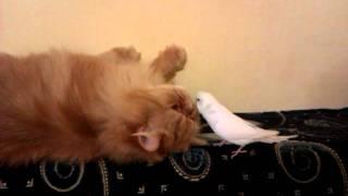 Кот и попугай 2
