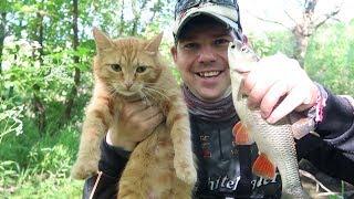 Рыбалка с котом. Голавль на микроречках в начале лета.