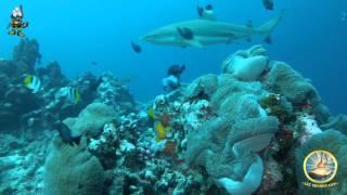 dive raiatea french polynesia