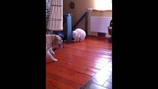 Кошки против собак!
