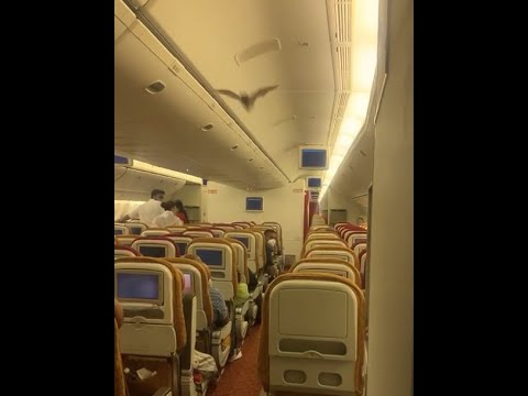 An Air India flight to the U.S. was forced to return after a bat was flying in the Business Class