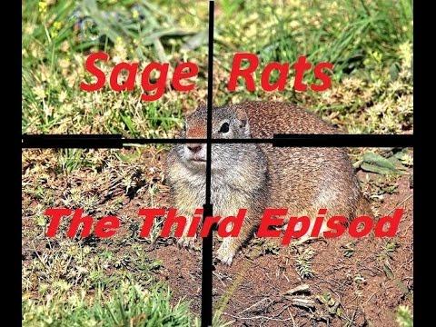 Varmint Hunting for Sage Rats.... Episode 3