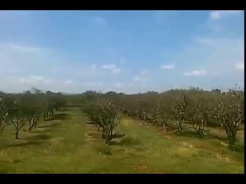 Naranjales Sierra de Cubitas (Sola) Camaguey, Cuba desde un omnibus Girón :-)
