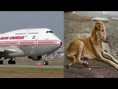 Air India Flight delays as Dog spotted on runway