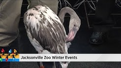 Jacksonville Zoo has some exciting events planned