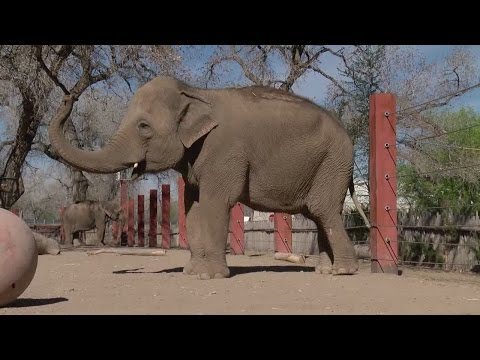 BioPark to host 50th birthday celebration for elephant