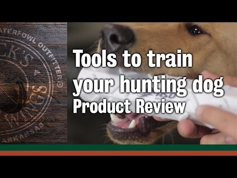 What Tools To Use When Training Your Hunting Dog