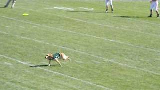 Zeke The Wonder Dog At Spartan Stadium