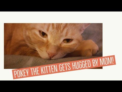 Cute ginger kitten gets hugged by her mom!