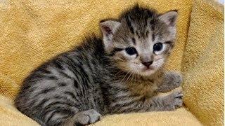 チャンネル登録していただくと、最新動画を確認する事が出来ます。登録はこちらから→https://tinyurl.com/y8pr35jx 【猫 保護】納屋の干し草...