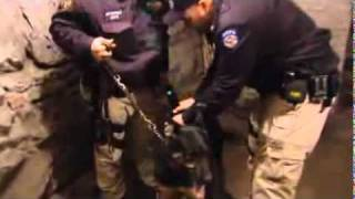 Nypd K9 Units Using New High-tech Equipment