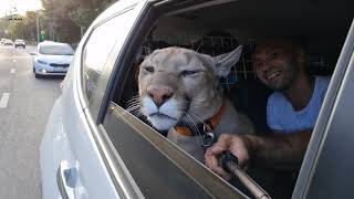 Furry passenger. Puma Messi rolled with the breeze