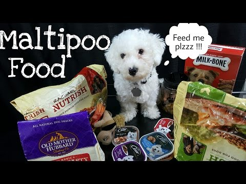 Best Dry Dog Food For Finicky Dogs