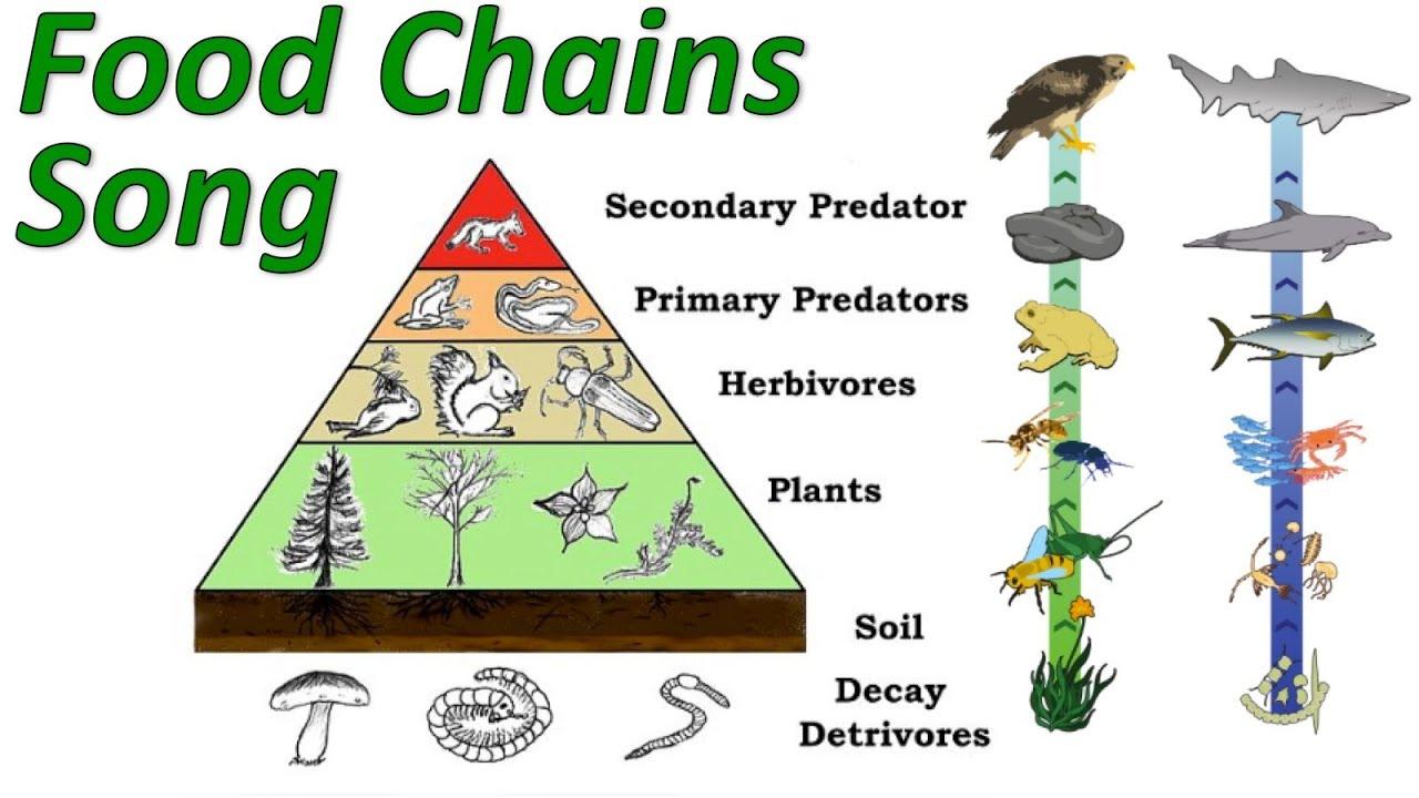 easy food chain diagram 2002 mitsubishi montero wiring chains youtube