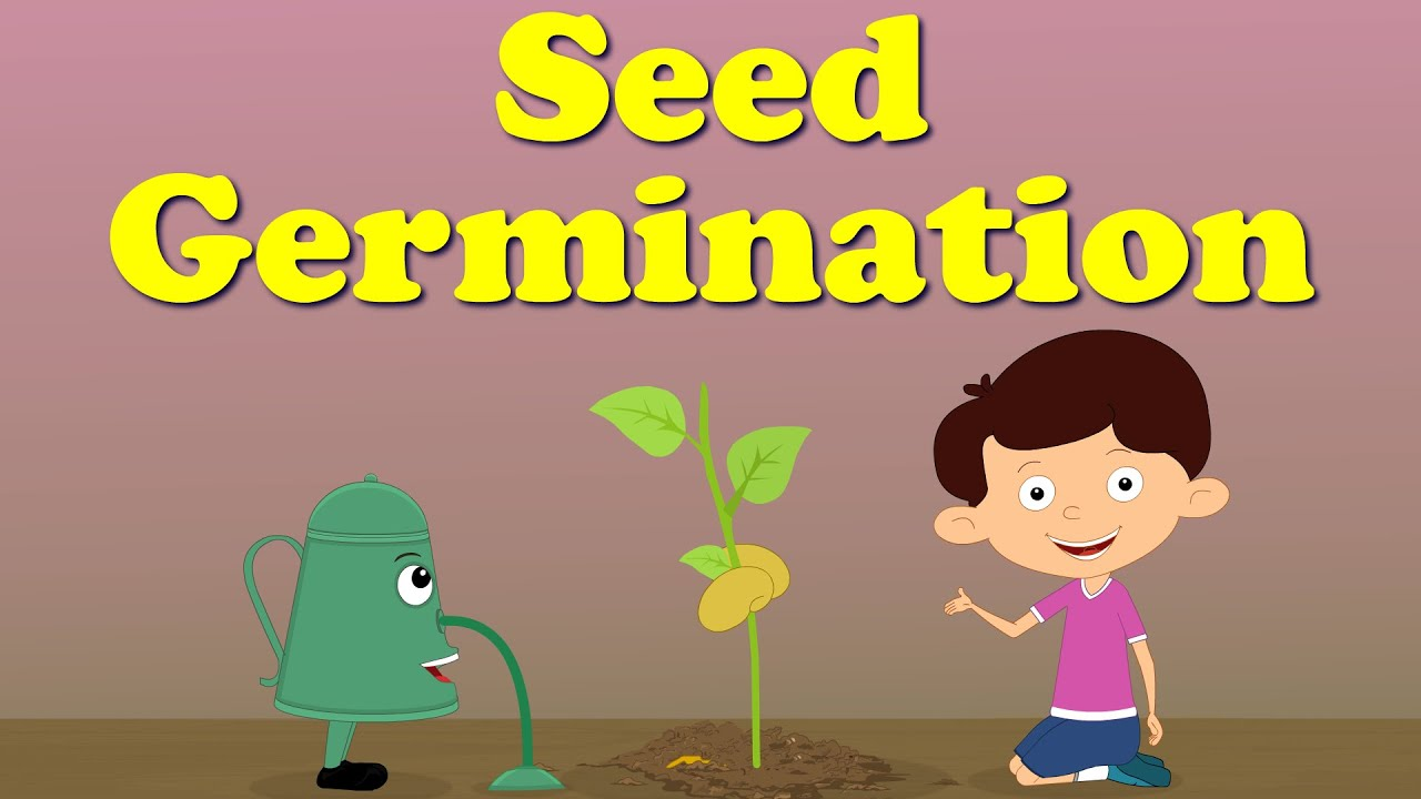 Seed Germination | #aumsum #kids #education #science #
