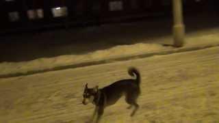 Подпрыгивает на 2 метра --- во это собачка. Bounces on 2 meters --- in this dog.