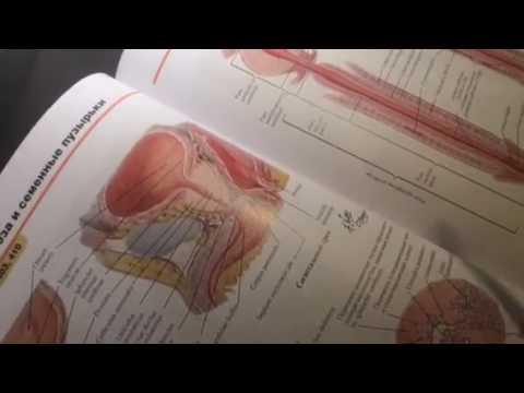Цистит. Современная диагностика, эффективное лечение и