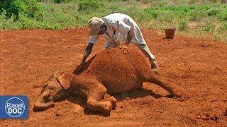 Baixar Documental: Elefantes Africanos - Parte 3