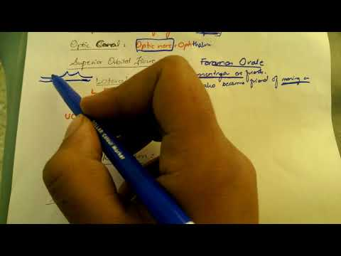 easieast MNEMONICS for structures through SKULL FORAMINA  PART 1 MUST WATCH