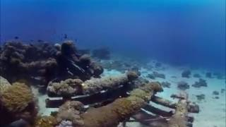 Дно океана. Дайвинг панорамное видео  в 3d 360 градусов