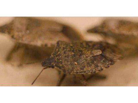 How Do You Get a Bed Bug Infestation?   Pest Control