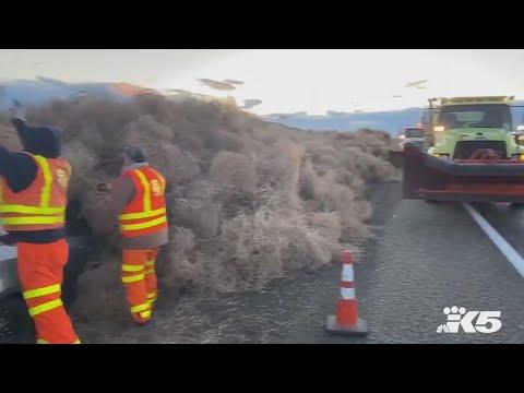 Doc Reno - Tumbleweed Avalanche Traps Car